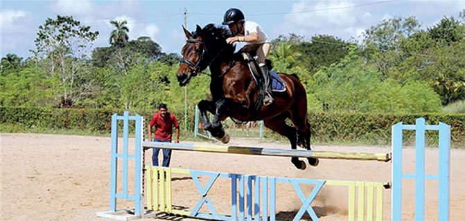 Havana's Seventh Elite Horse Auction, a Jump Towards Excellence