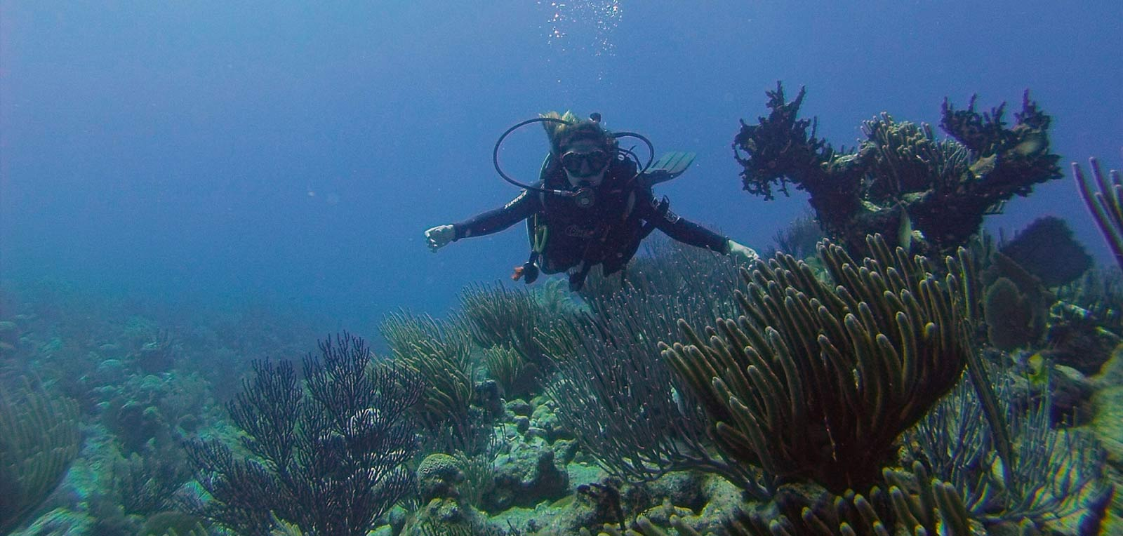 Diving stands out in Cuba's wetland tourism product