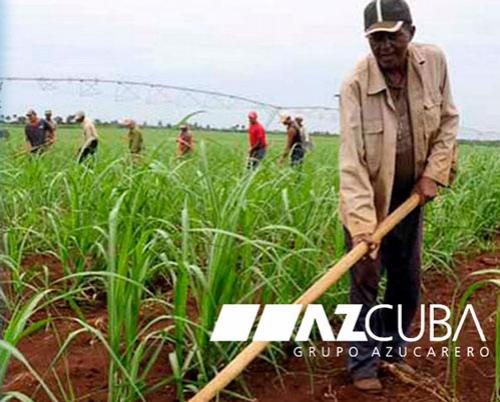 Azcuba group explains challenges for next sugarcane harvest